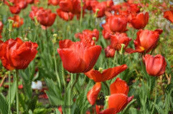 flowers i n sunlight