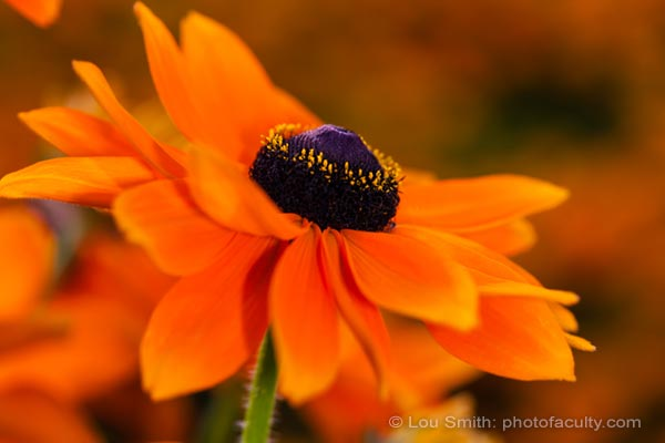 Focus Tips for Photographing Flowers